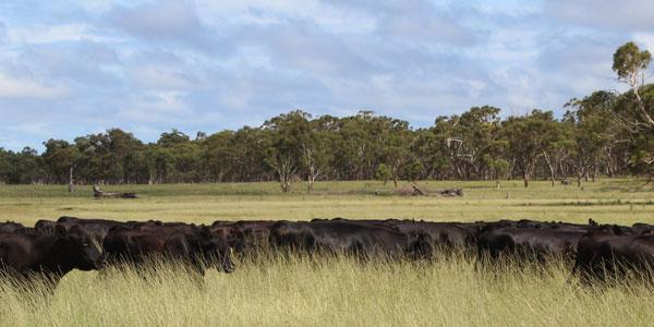 Eaglehawk Farms