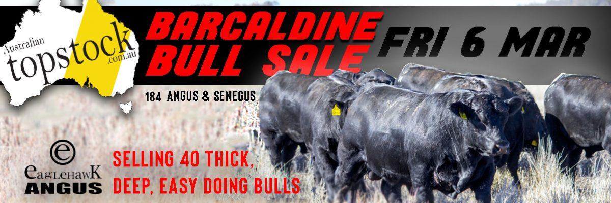 Topstock Barcaldine Angus & Senegus Bull Sale