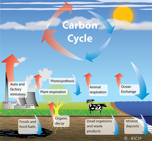 Carbon Emissions and the Beef Industry….The blame game.